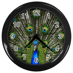 Peacock Wall Clock (Black)