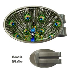Peacock Money Clip (oval)