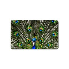Peacock Magnet (Name Card)