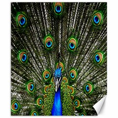 Peacock Canvas 20  x 24  (Unframed)