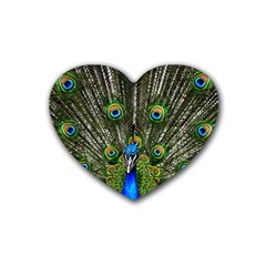 Peacock Drink Coasters 4 Pack (Heart)