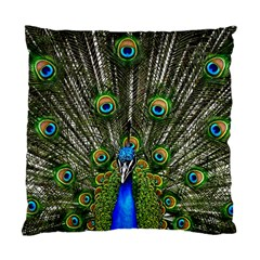 Peacock Cushion Case (Two Sided)