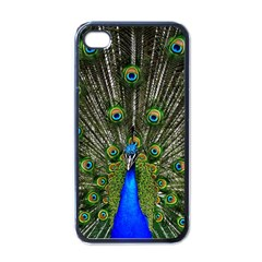 Peacock Apple Iphone 4 Case (black)