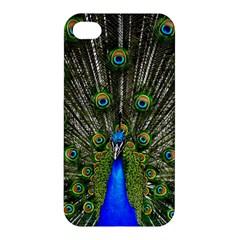 Peacock Apple Iphone 4/4s Hardshell Case