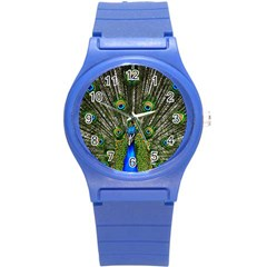 Peacock Plastic Sport Watch (Small)