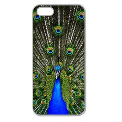 Peacock Apple Seamless iPhone 5 Case (Clear)