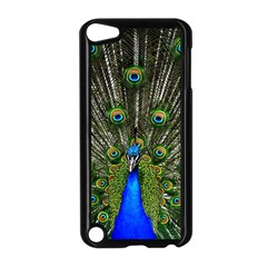 Peacock Apple iPod Touch 5 Case (Black)