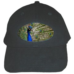Peacock Black Baseball Cap
