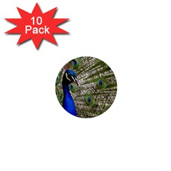 Peacock 1  Mini Button (10 Pack)