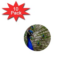 Peacock 1  Mini Button Magnet (10 Pack)