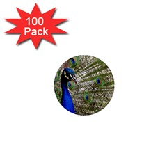 Peacock 1  Mini Button Magnet (100 pack)