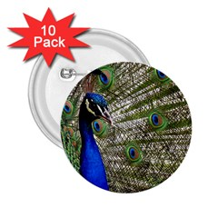 Peacock 2 25  Button (10 Pack)