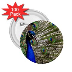 Peacock 2.25  Button (100 pack)