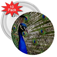 Peacock 3  Button (10 pack)