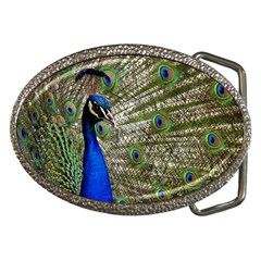 Peacock Belt Buckle (Oval)