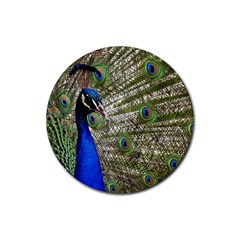 Peacock Drink Coasters 4 Pack (Round)