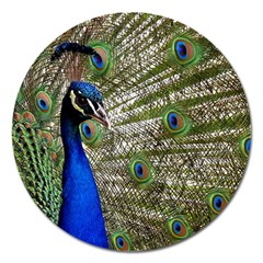 Peacock Magnet 5  (round)
