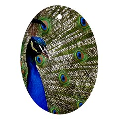 Peacock Oval Ornament (Two Sides)