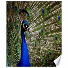 Peacock Canvas 8  X 10  (unframed)