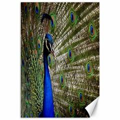 Peacock Canvas 12  x 18  (Unframed)