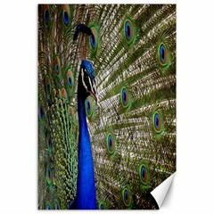 Peacock Canvas 24  X 36  (unframed)