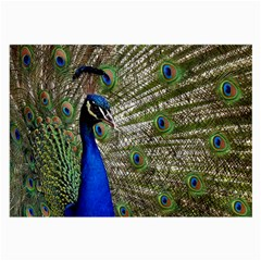 Peacock Glasses Cloth (large, Two Sided)