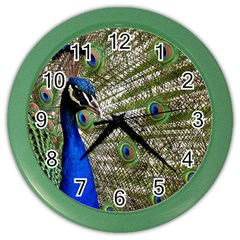 Peacock Wall Clock (Color)