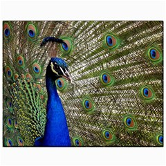 Peacock Canvas 11  X 14  (unframed)