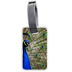 Peacock Luggage Tag (One Side)