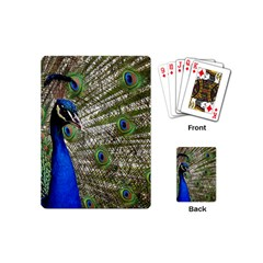 Peacock Playing Cards (Mini)