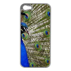Peacock Apple iPhone 5 Case (Silver)