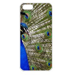 Peacock Apple Iphone 5 Seamless Case (white)