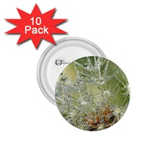 Dandelion 1.75  Button (10 pack)