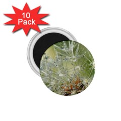 Dandelion 1 75  Button Magnet (10 Pack)