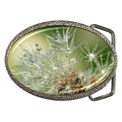 Dandelion Belt Buckle (oval)
