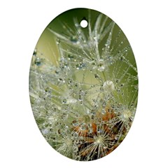Dandelion Oval Ornament (two Sides)