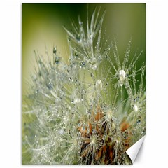 Dandelion Canvas 18  x 24  (Unframed)