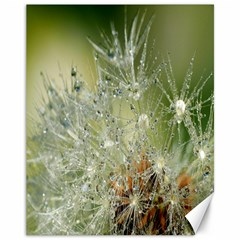Dandelion Canvas 11  x 14  (Unframed)