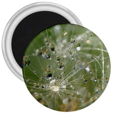 Dandelion 3  Button Magnet