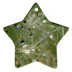 Dandelion Star Ornament