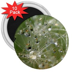 Dandelion 3  Button Magnet (10 pack)