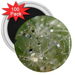 Dandelion 3  Button Magnet (100 pack)