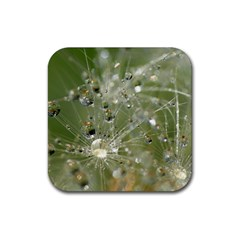 Dandelion Drink Coaster (Square)