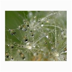 Dandelion Glasses Cloth (small)