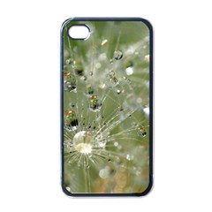 Dandelion Apple iPhone 4 Case (Black)