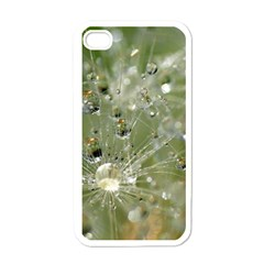 Dandelion Apple iPhone 4 Case (White)