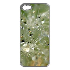 Dandelion Apple Iphone 5 Case (silver)