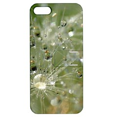 Dandelion Apple Iphone 5 Hardshell Case With Stand