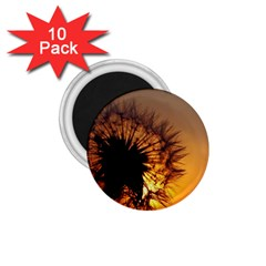 Dandelion 1.75  Button Magnet (10 pack)