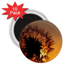 Dandelion 2.25  Button Magnet (10 pack)